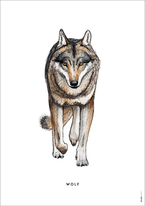 Poster Wolf A4