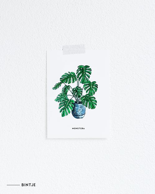 Postcard Monstera plant