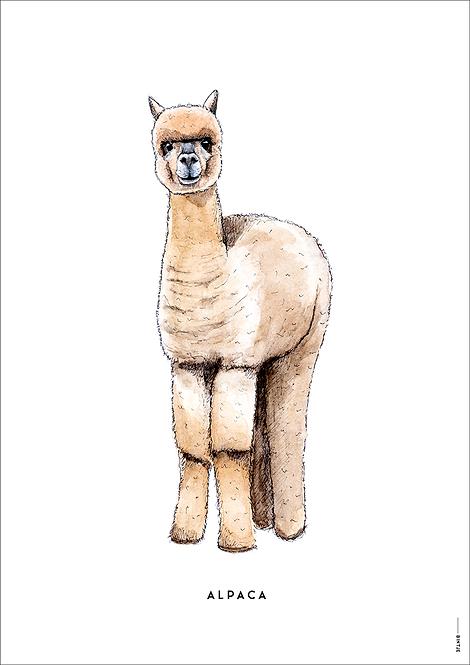 Poster Alpaca A4