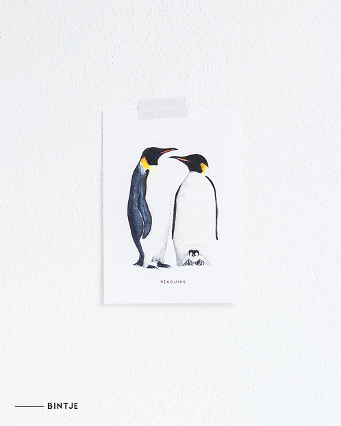 Postcard Pinguins