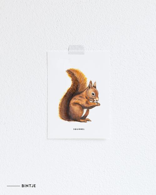 Postcard Eekhoorn