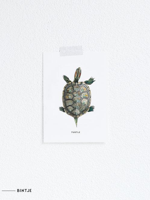 Postcard Schildpad