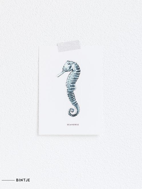 Postcard Zeepaardje