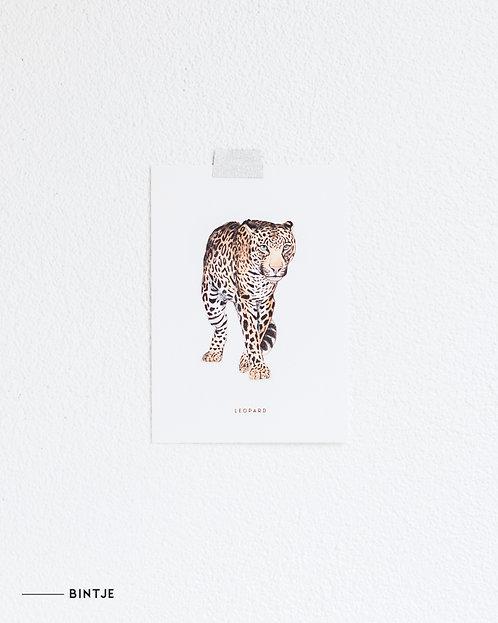 Postcard Luipaard