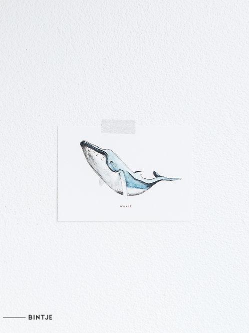 Postcard Walvis
