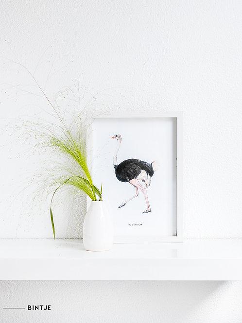 Poster Struisvogel A4
