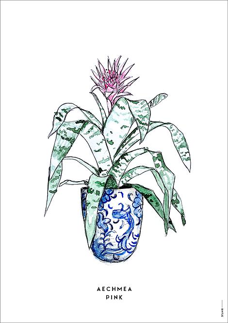 Poster Plant Aechmea A4
