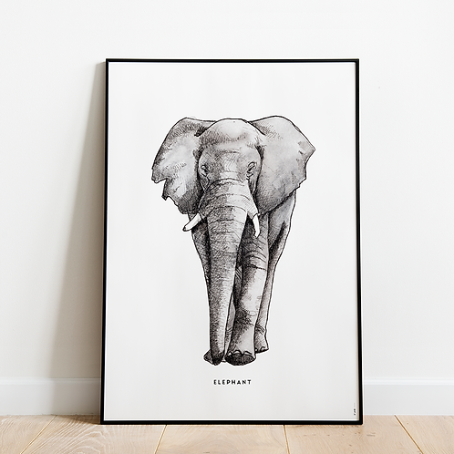 Poster Olifant 50x70
