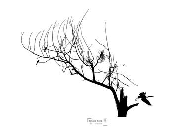 La branche qui prend vie.jpg