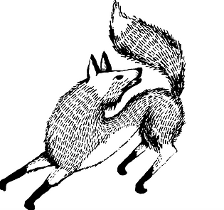 Lifestyle brand positioning, a hand drawn fox