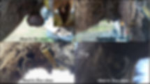 montage_églantine.jpg