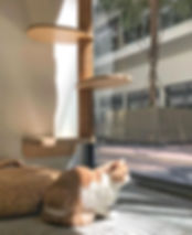 Image result for cat hotel singapore