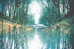 Haunting Reflection