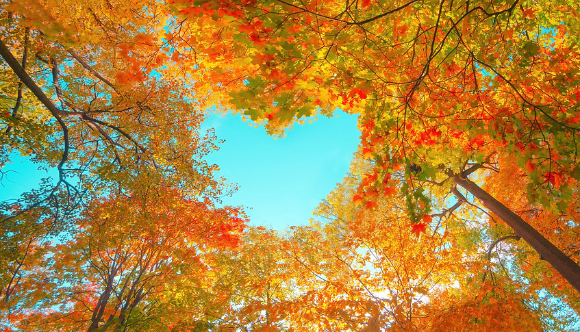 Autumn forest background. Vibrant color