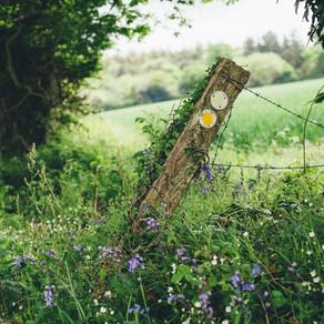 Nature Poem by Dan Melling
