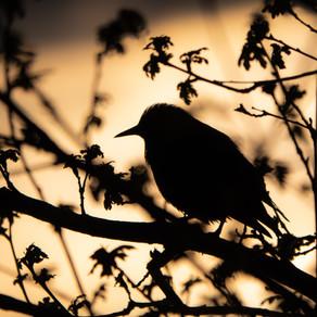 Birdwatcher by Matthew McGuirk