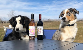 Corky & Crush are our winery greeter dogs.