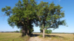 Mecklenburgische Seenplatte: Feldweg vor Grammertin