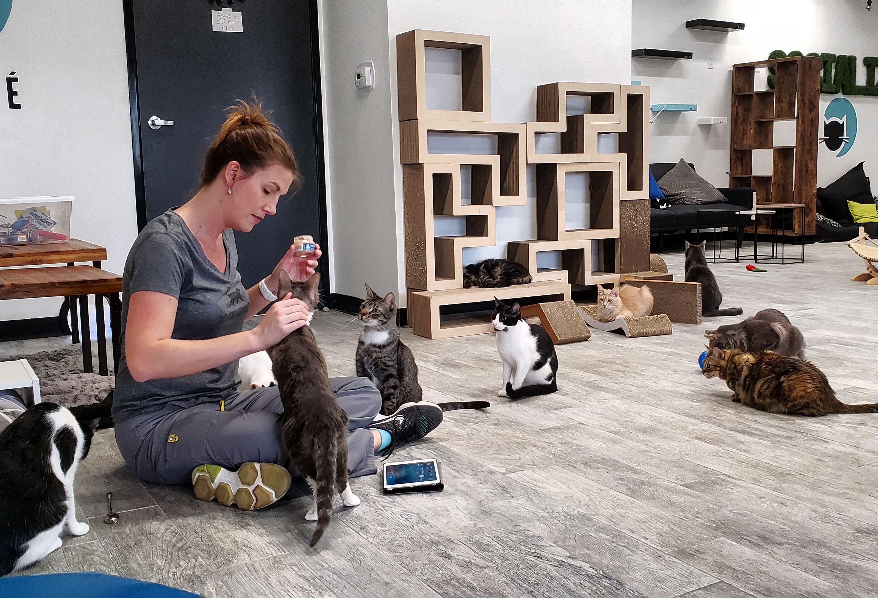 Typical Wednesday at CatCafe Lounge
