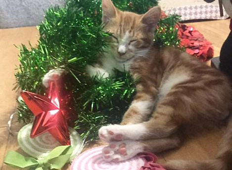 Holiday Happiness for Cats (Part I)