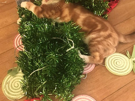 Holiday Happiness for Cats (Part II)