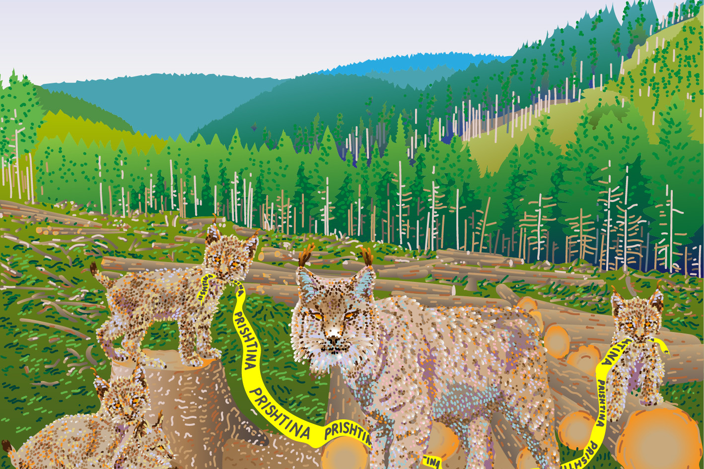 Deforest lynxs