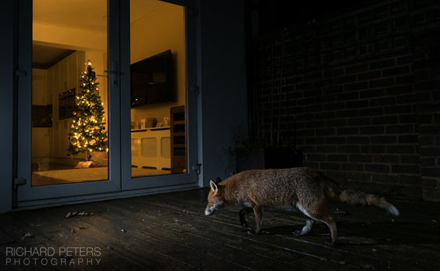 Richard Peters - wildlife photographer extraordinaire