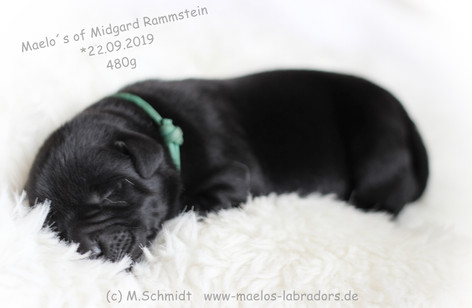 Rammstein mit1.JPG