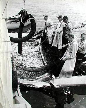 Fisheries_800_V.jpg
