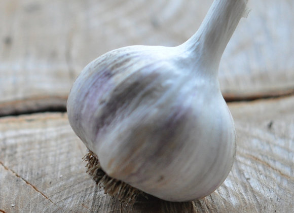 Garlic - German Red