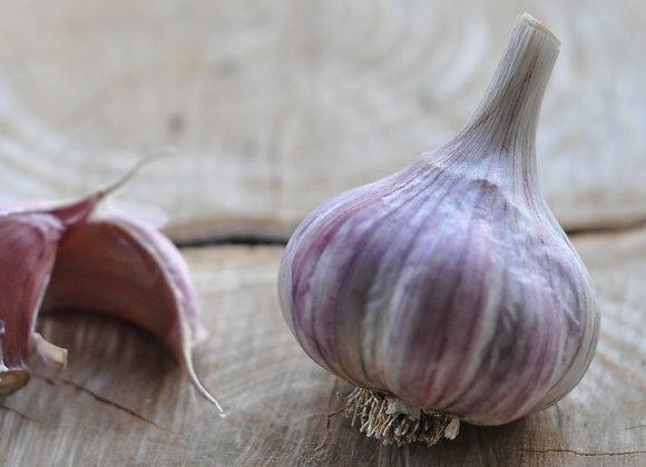 Garlic - Tibetan