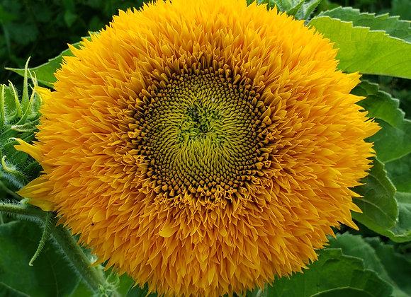 September Flower Subscription (pick-up)