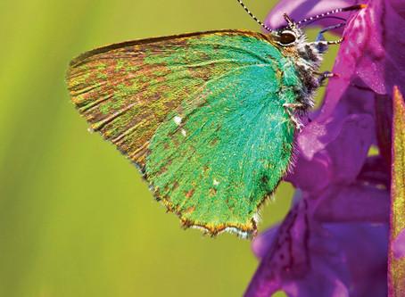 Mariposas: para los cambios en nuestra vida: EL PERDÓN