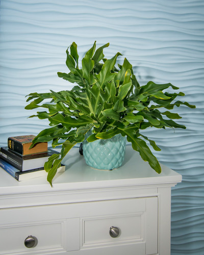 Home styling, accessories, and home decor