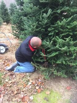 Rock Christmas Tree 2