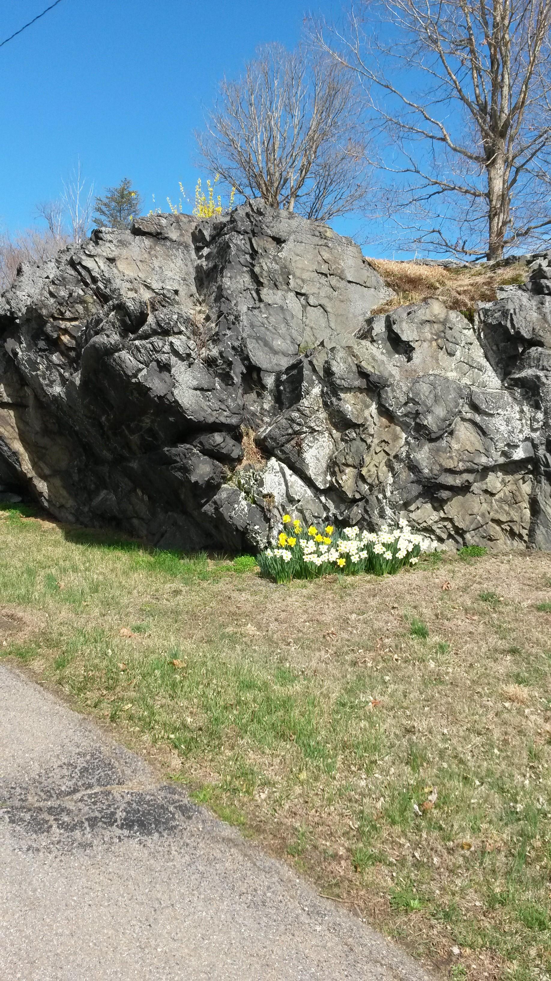 Rock Spring 3