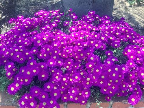 Cluster of Purple&Yellowflowers