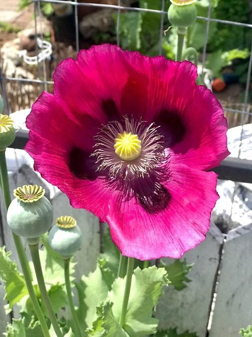 Purple andYellow flower RB