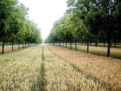 AGROOF-scop-Agroforestry-Development.jpg