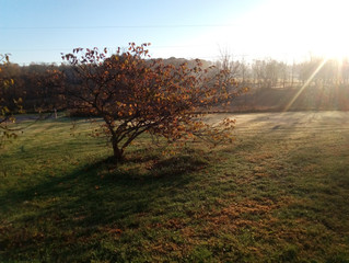 Another Beautiful Fall Morning. Nov 2016