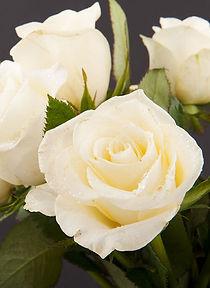 Ivory-Rose-Bouquet_53018668.jpg