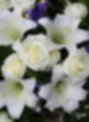 White-Lilies-with-Blue-Iris_54181264.jpg