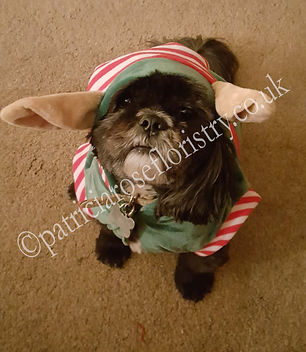 RALPHIE - MY LITTLE MAN IN HIS ELFIE OUT