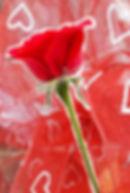 Single Red Rose Speaks Volumes.jpg