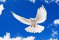 DOVE IN FLIGHT BLUE SKY_edited.jpg