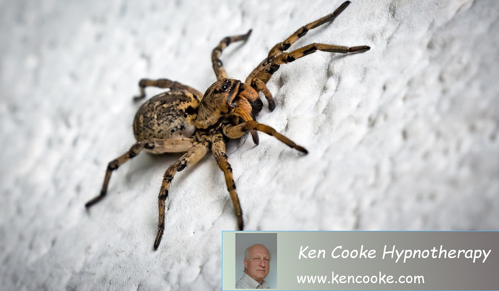Photo of a spider
