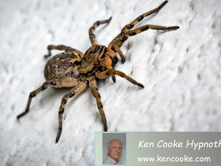 Can Hypnotherapy Help Cure My Extreme Fear of Spiders?
