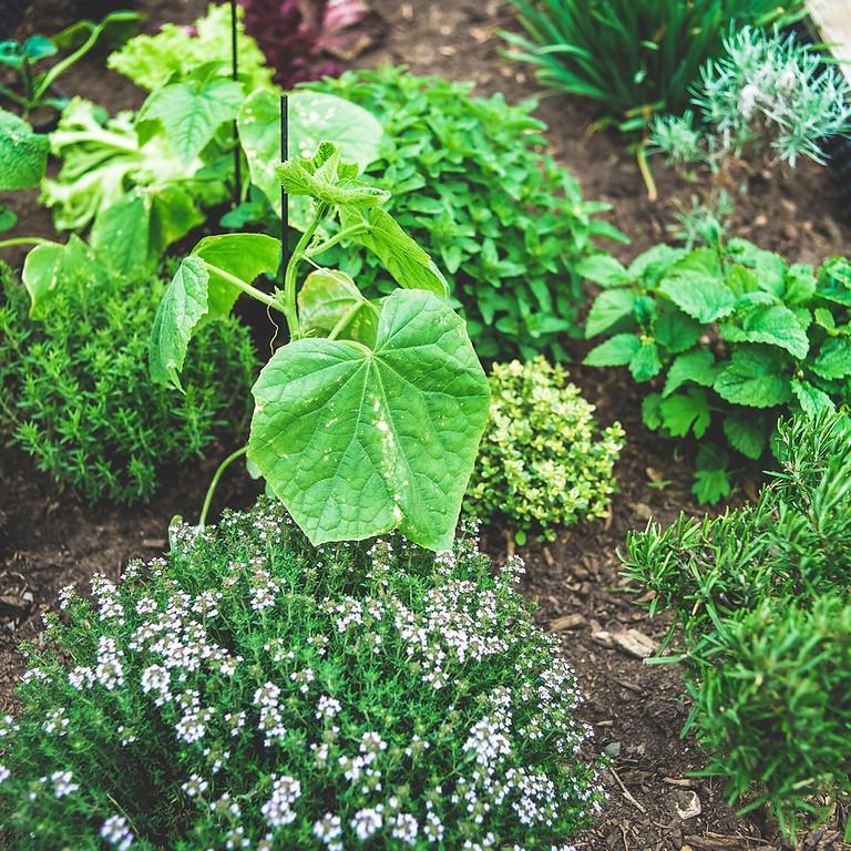 Sacred Herbs Workshop