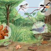 L'éducation holistique et écologique pour l'enfant.