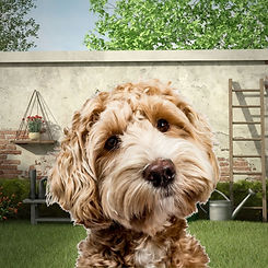 background-replace-dog-after.jpg